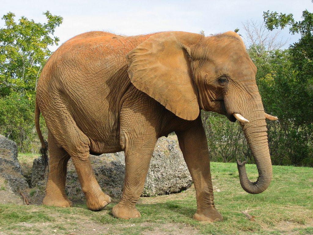 Elefant (Bild: Eugenia und Julia, CC BY SA 2.0)