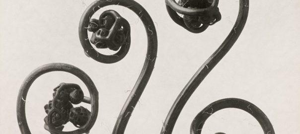 Karl Blossfeldt: Haarfarn. Junge, noch eingerollte Wedel, o. J. (Bild: © Courtesy, Die Photographische Sammlung/SK Stiftung Kultur, Köln in Kooperation mit der Sammlung Karl Blossfeldt in der Universität der Künste, Berlin, Universitätsarchiv, 2019)