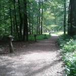 Loheland, Waldweg mit Leuchten (Bild: K. Berkemann)