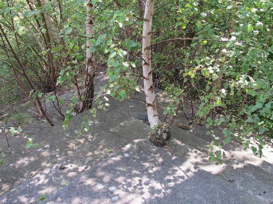 Auf der Freitreppe des Kulturhauses Zinnowitz wuchern wieder die Birken (Bild: D. Bartetzko)
